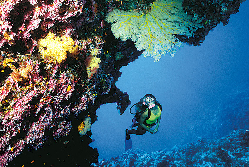 Picture of Boat Diving Package